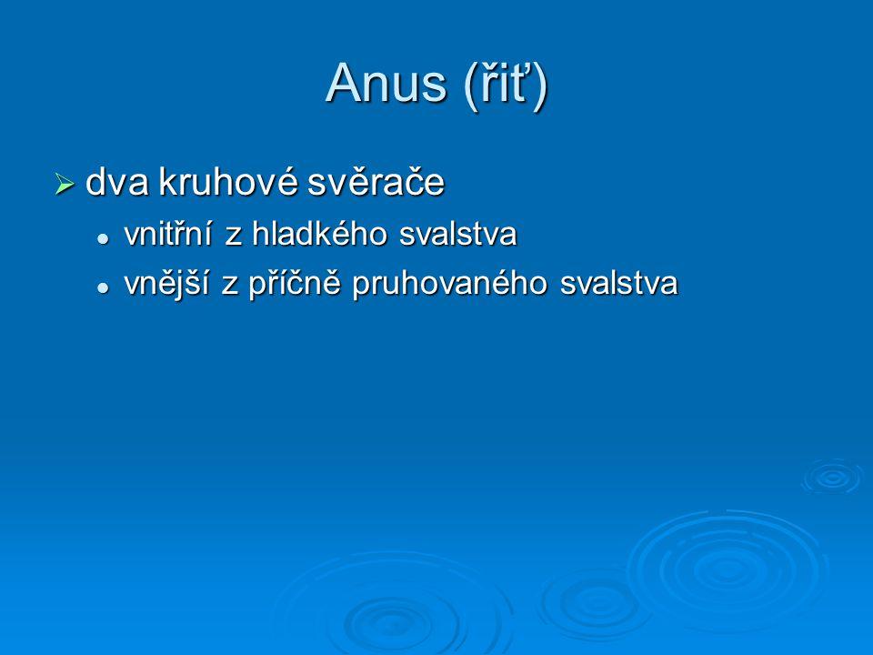 Anus (řiť)  dva kruhové svěrače vnitřní z hladkého svalstva vnitřní z hladkého svalstva vnější z příčně pruhovaného svalstva vnější z příčně pruhovan