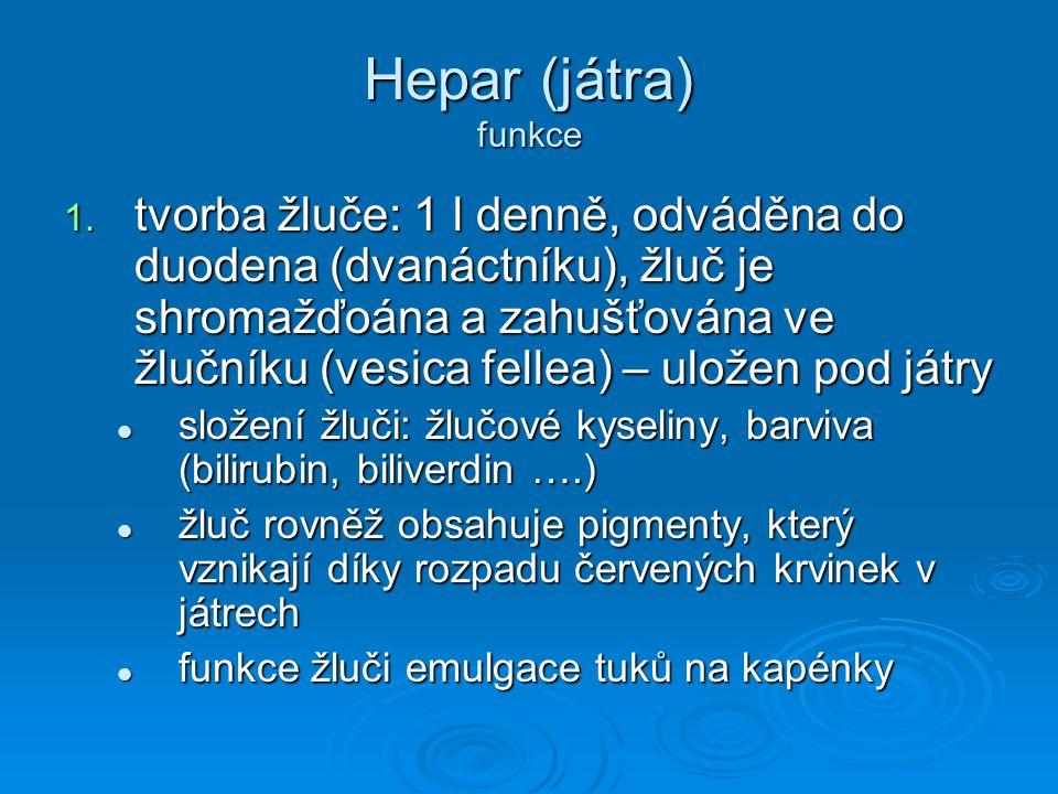 Hepar (játra) funkce 1. tvorba žluče: 1 l denně, odváděna do duodena (dvanáctníku), žluč je shromažďoána a zahušťována ve žlučníku (vesica fellea) – u