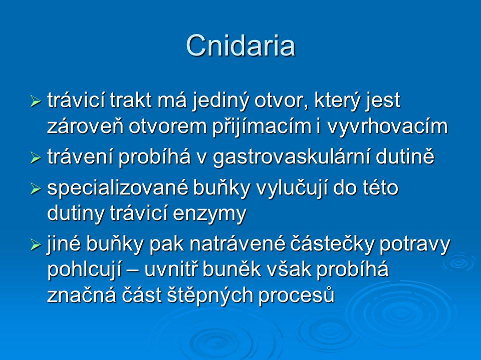 Cnidaria  trávicí trakt má jediný otvor, který jest zároveň otvorem přijímacím i vyvrhovacím  trávení probíhá v gastrovaskulární dutině  specializo