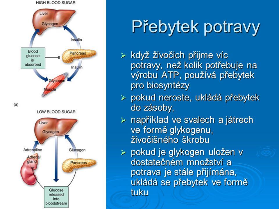 Přebytek potravy  když živočich přijme víc potravy, než kolik potřebuje na výrobu ATP, používá přebytek pro biosyntézy  pokud neroste, ukládá přebyt