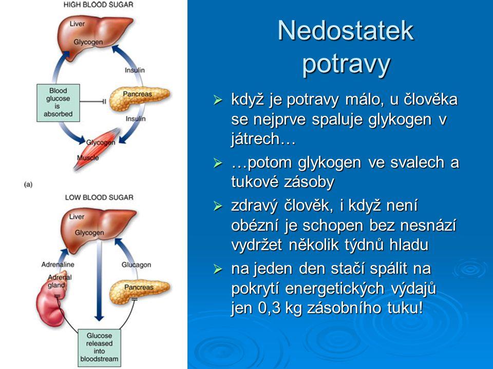 Nedostatek potravy  když je potravy málo, u člověka se nejprve spaluje glykogen v játrech…  …potom glykogen ve svalech a tukové zásoby  zdravý člov