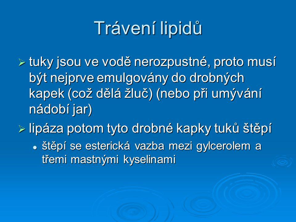 Trávení lipidů  tuky jsou ve vodě nerozpustné, proto musí být nejprve emulgovány do drobných kapek (což dělá žluč) (nebo při umývání nádobí jar)  li