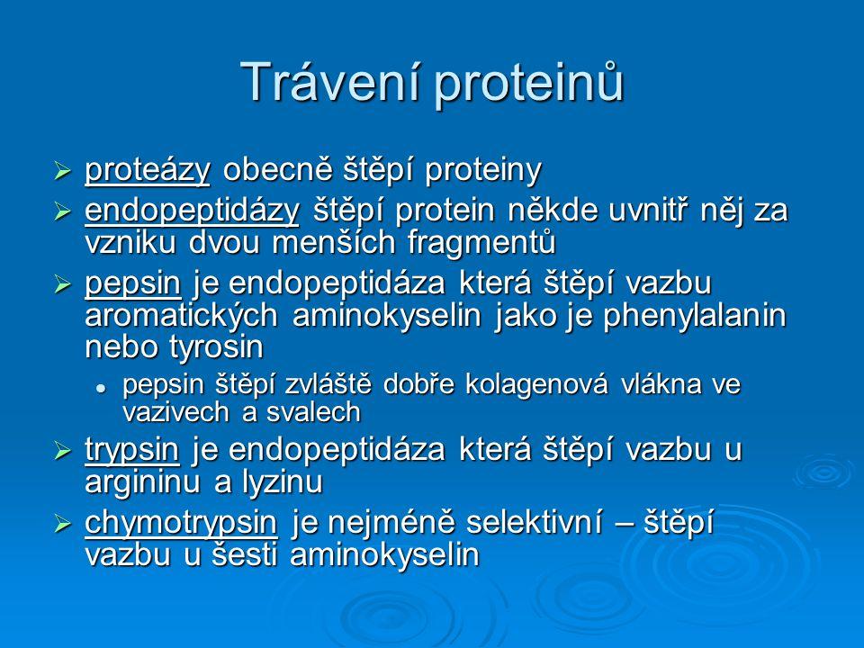 Trávení proteinů  proteázy obecně štěpí proteiny  endopeptidázy štěpí protein někde uvnitř něj za vzniku dvou menších fragmentů  pepsin je endopept