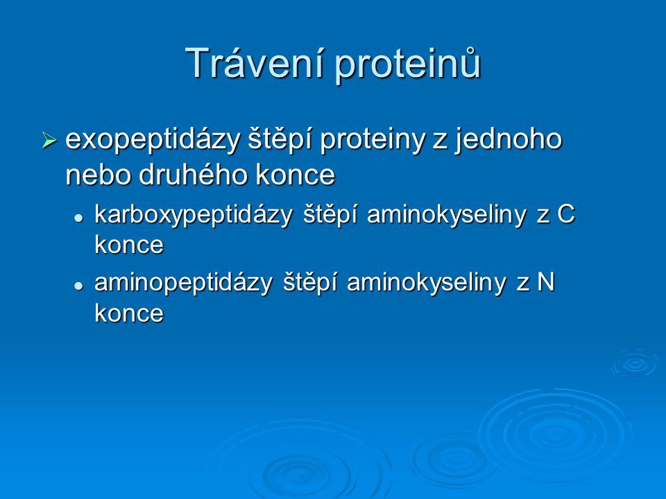 Trávení proteinů  exopeptidázy štěpí proteiny z jednoho nebo druhého konce karboxypeptidázy štěpí aminokyseliny z C konce karboxypeptidázy štěpí amin
