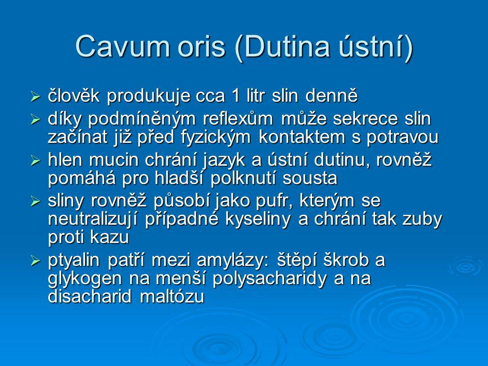 Cavum oris (Dutina ústní)  člověk produkuje cca 1 litr slin denně  díky podmíněným reflexům může sekrece slin začínat již před fyzickým kontaktem s