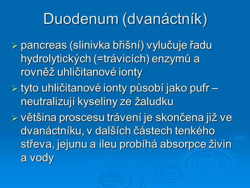 Duodenum (dvanáctník)  pancreas (slinivka břišní) vylučuje řadu hydrolytických (=trávicích) enzymů a rovněž uhličitanové ionty  tyto uhličitanové io