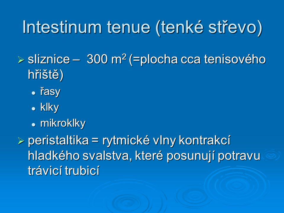 Intestinum tenue (tenké střevo)  sliznice – 300 m 2 (=plocha cca tenisového hřiště) řasy řasy klky klky mikroklky mikroklky  peristaltika = rytmické