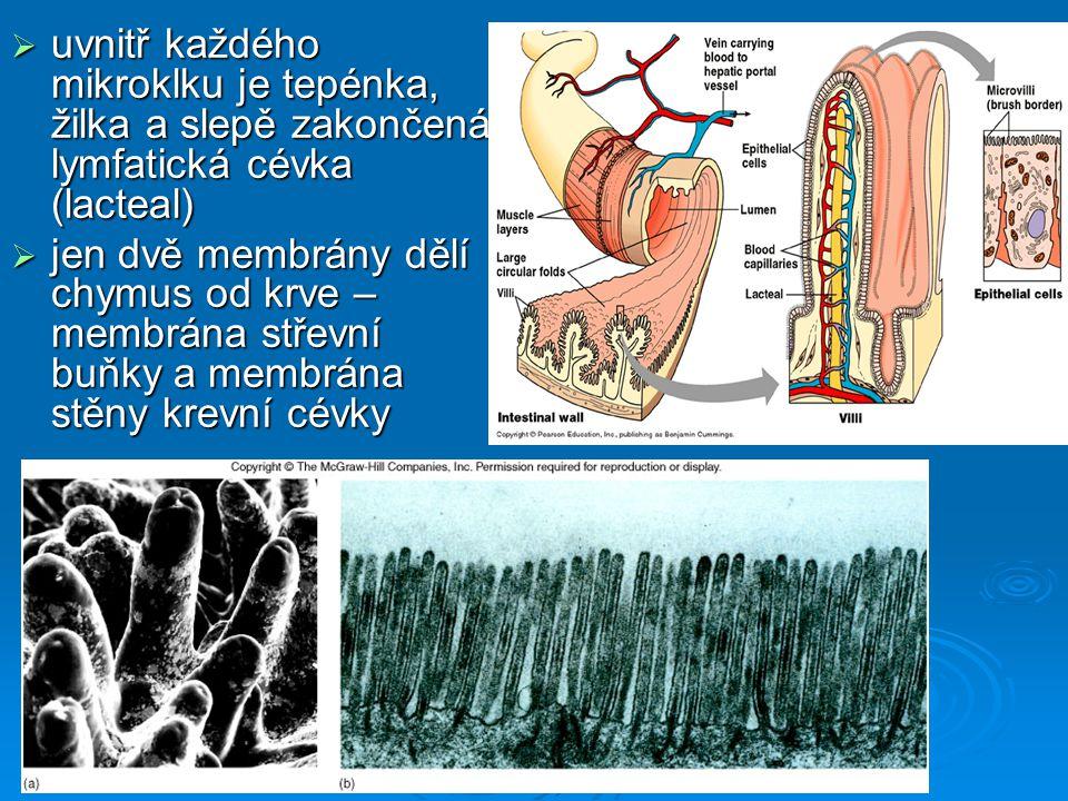  uvnitř každého mikroklku je tepénka, žilka a slepě zakončená lymfatická cévka (lacteal)  jen dvě membrány dělí chymus od krve – membrána střevní bu