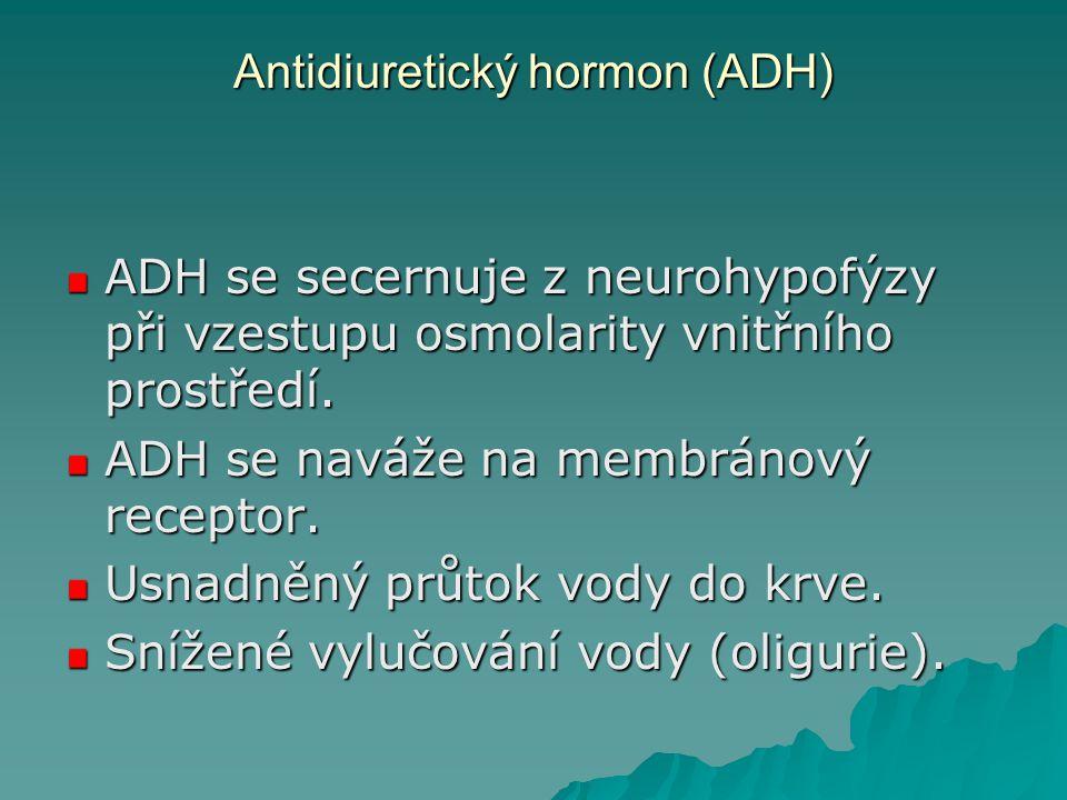 Antidiuretický hormon (ADH) ADH se secernuje z neurohypofýzy při vzestupu osmolarity vnitřního prostředí. ADH se naváže na membránový receptor. Usnadn