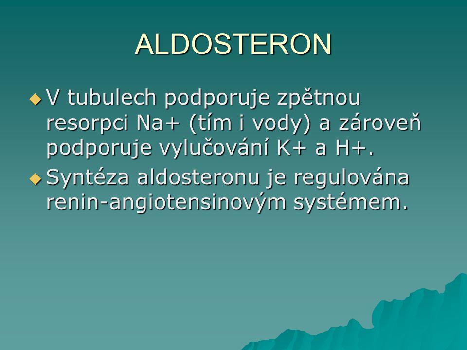 ALDOSTERON  V tubulech podporuje zpětnou resorpci Na+ (tím i vody) a zároveň podporuje vylučování K+ a H+.  Syntéza aldosteronu je regulována renin-