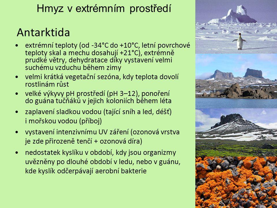 Hmyz v extrémním prostředí Antarktida extrémní teploty (od -34°C do +10°C, letní povrchové teploty skal a mechu dosahují +21°C), extrémně prudké větry