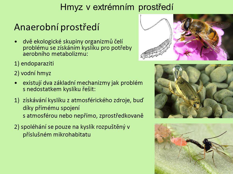 Hmyz v extrémním prostředí Anaerobní prostředí dvě ekologické skupiny organizmů čelí problému se získáním kyslíku pro potřeby aerobního metabolizmu: 1