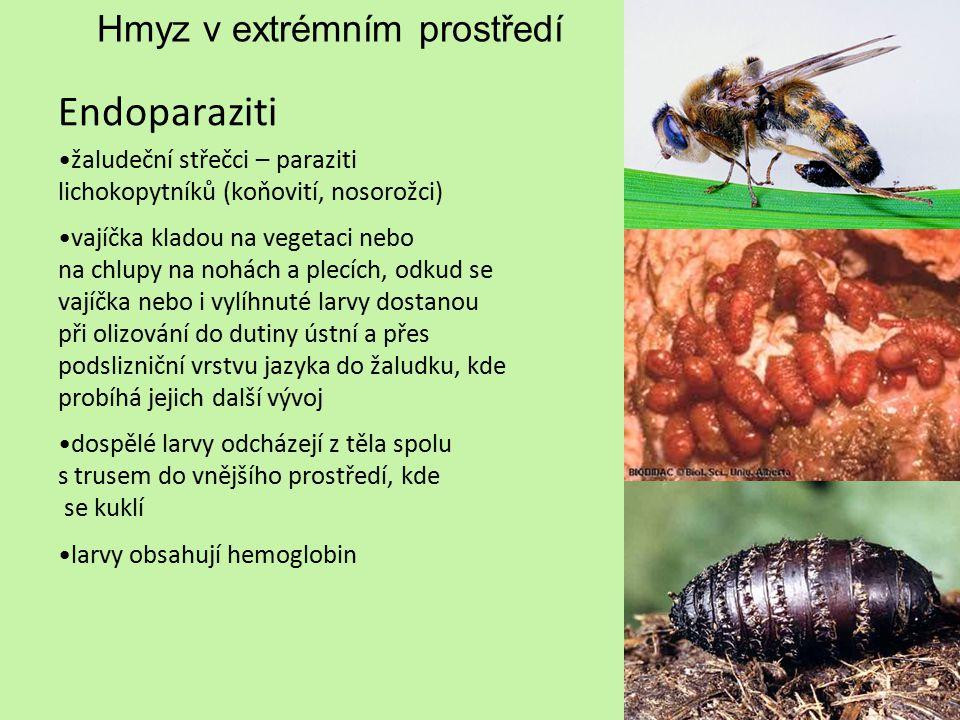 Hmyz v extrémním prostředí Endoparaziti žaludeční střečci – paraziti lichokopytníků (koňovití, nosorožci) vajíčka kladou na vegetaci nebo na chlupy na