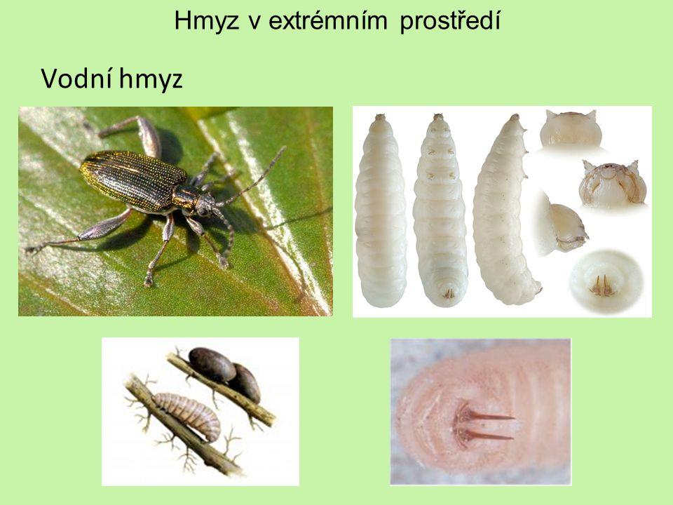 Hmyz v extrémním prostředí Vodní hmyz