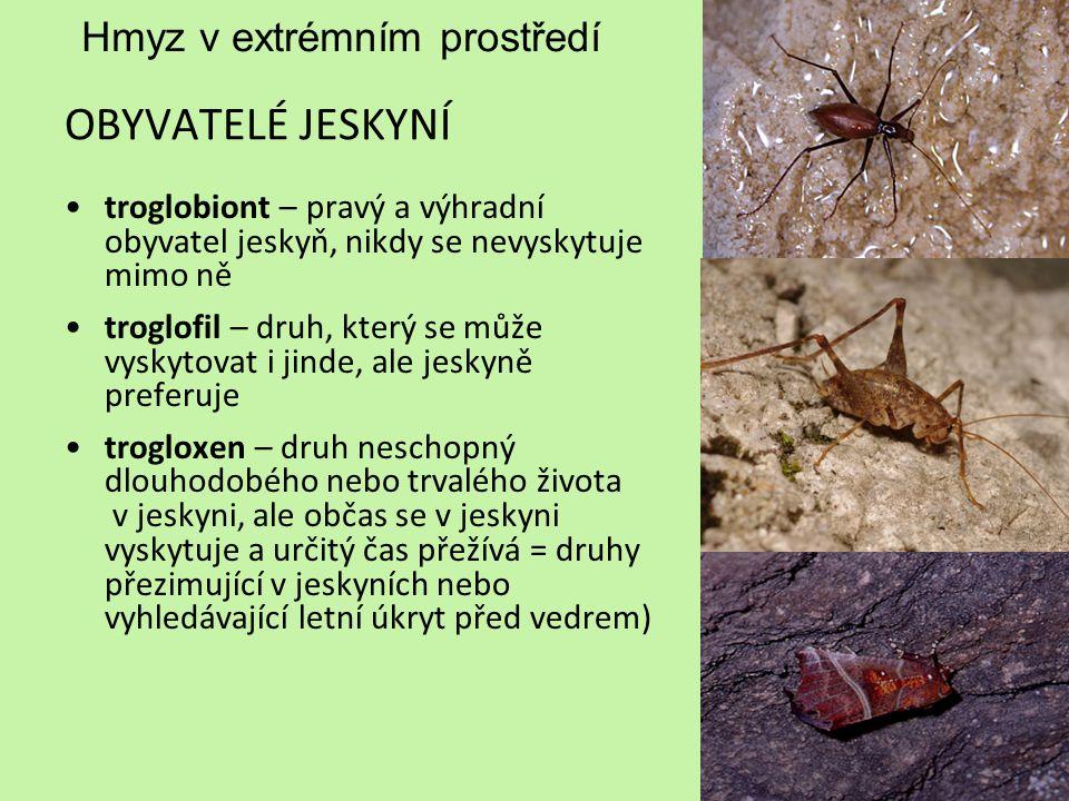Hmyz v extrémním prostředí OBYVATELÉ JESKYNÍ troglobiont – pravý a výhradní obyvatel jeskyň, nikdy se nevyskytuje mimo ně troglofil – druh, který se m