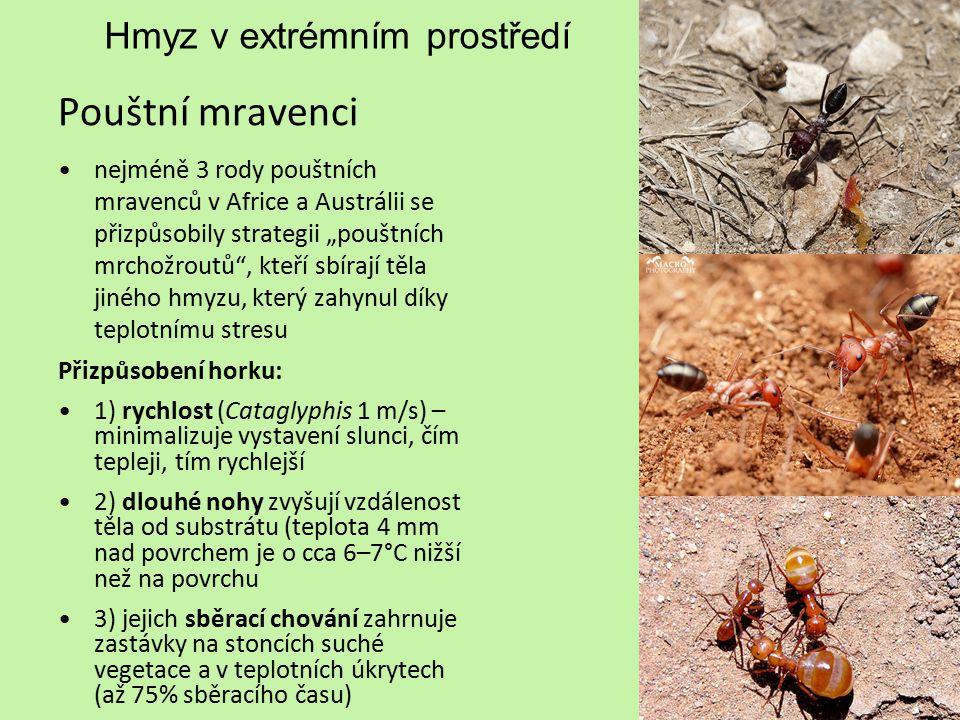 Hmyz v extrémním prostředí Antarktida pakomár Belgica antarctica největší čistě suchozemský živočich (2-6 mm) žije cca 10 dní; bezkřídlý - zamezuje odvátí na nepříznivá místa a šetří energii larva přežívá zmrznutí tělních tekutin, životní cyklus trvá dva roky černé lesklé zbarvení pomáhá absorbovat tepelné záření a možná blokuje i nebezpečné UV záření