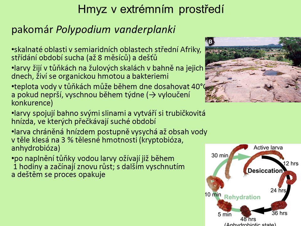Hmyz v extrémním prostředí pakomár Polypodium vanderplanki skalnaté oblasti v semiaridních oblastech střední Afriky, střídání období sucha (až 8 měsíc