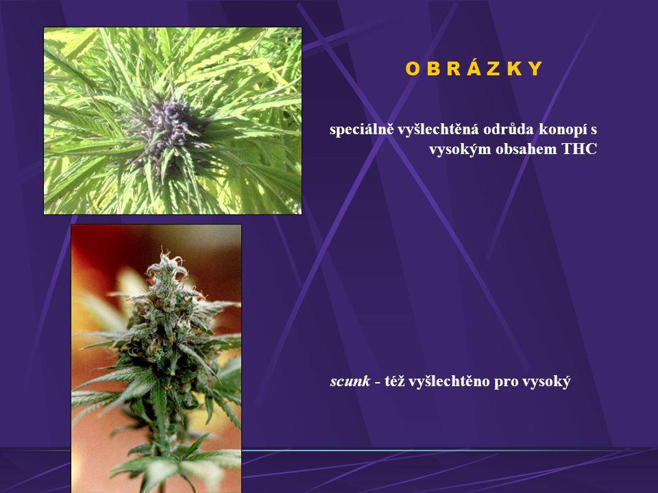 O B R Á Z K Y speciálně vyšlechtěná odrůda konopí s vysokým obsahem THC scunk - též vyšlechtěno pro vysoký