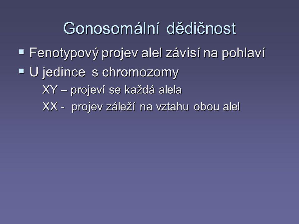 Gonosomální dědičnost  Fenotypový projev alel závisí na pohlaví  U jedince s chromozomy XY – projeví se každá alela XX - projev záleží na vztahu obo