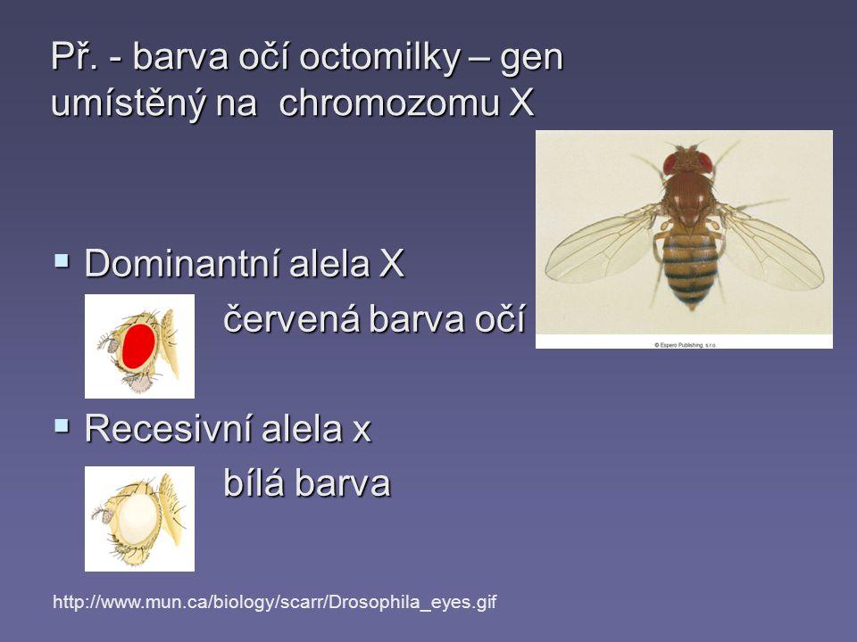  Dominantní alela X červená barva očí  Recesivní alela x bílá barva http://www.mun.ca/biology/scarr/Drosophila_eyes.gif Př. - barva očí octomilky –