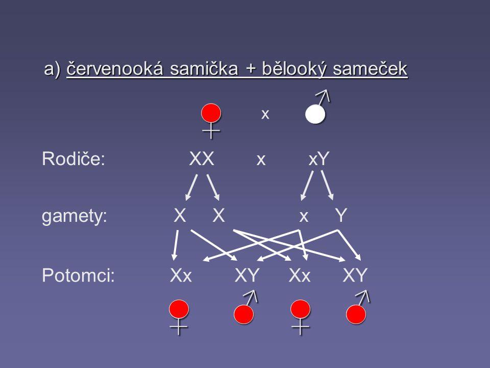 a) červenooká samička + bělooký sameček Rodiče: gamety: Potomci: X X x Y XxXYXxXY♀ ♂ x XX x xY♀♀ ♂♂