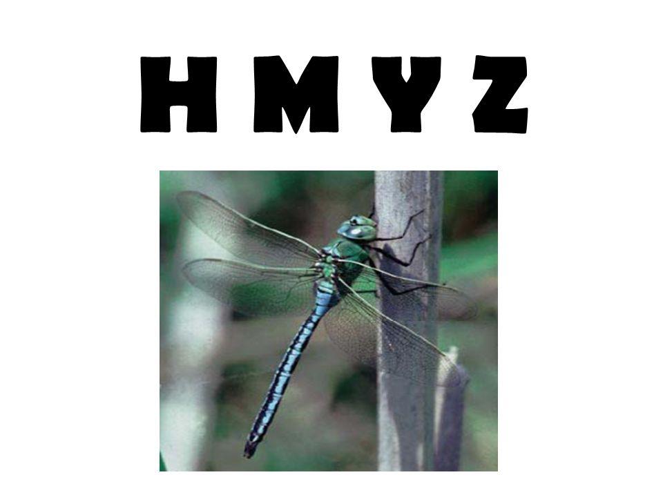 TERMITI – sociální hmyz, živí se dřevem – symbiotické bakterie – brvitky, staví obrovská termitiště, TROPY, SUBTROPY ŠKVOŘI – přední pár křídel –KRYTKY, klíšťky na zadečku, kousací úú, VŠEŽRAVÍ