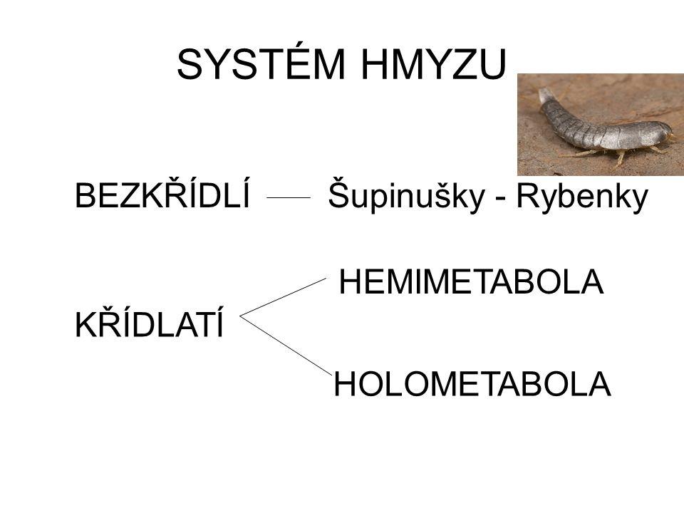 SYSTÉM HMYZU BEZKŘÍDLÍ KŘÍDLATÍ HEMIMETABOLA HOLOMETABOLA Šupinušky - Rybenky