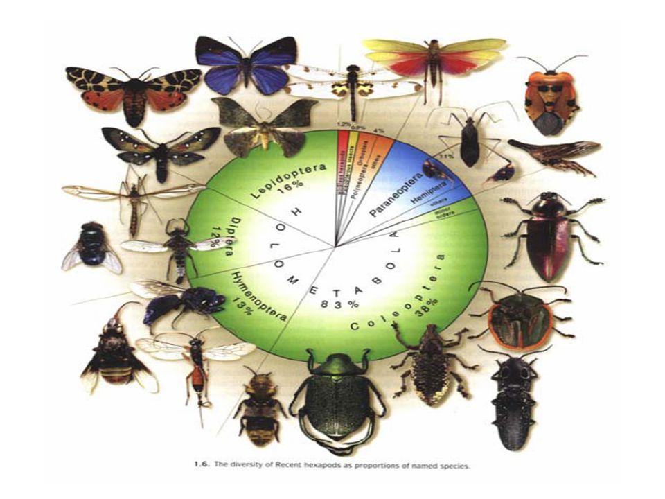 Proč je hmyz důležitý Ekologicky velmi variabilní skupina (může žít na zemi, ve vodě, v půdě a ve vzduchu) A TAKÉ VELMI VÝZNAMNÁ Hmyz dominuje v potravních řetězcích v počtu i objemu (významný zdroj potravy, ale i významný konzument a predátor) OPYLOVAČ parazitismus či přenos chorob kontrola škůdců