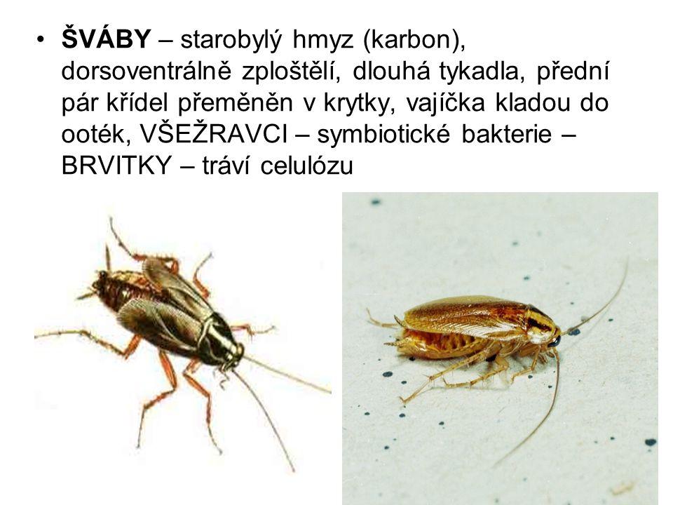 ŠVÁBY – starobylý hmyz (karbon), dorsoventrálně zploštělí, dlouhá tykadla, přední pár křídel přeměněn v krytky, vajíčka kladou do ooték, VŠEŽRAVCI – symbiotické bakterie – BRVITKY – tráví celulózu