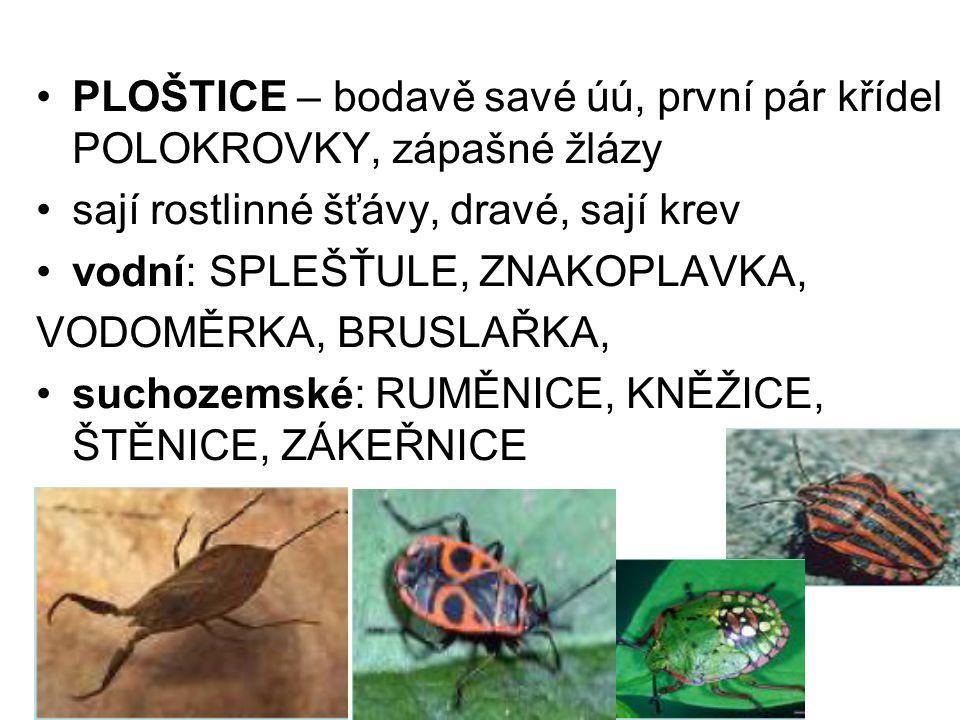 PLOŠTICE – bodavě savé úú, první pár křídel POLOKROVKY, zápašné žlázy sají rostlinné šťávy, dravé, sají krev vodní: SPLEŠŤULE, ZNAKOPLAVKA, VODOMĚRKA, BRUSLAŘKA, suchozemské: RUMĚNICE, KNĚŽICE, ŠTĚNICE, ZÁKEŘNICE