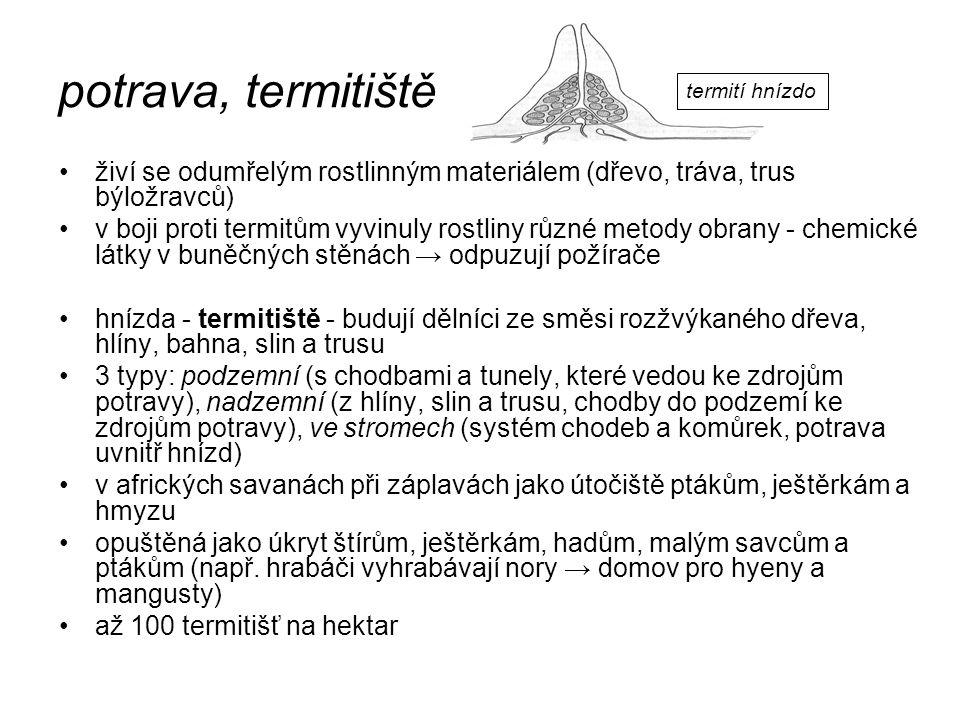 potrava, termitiště živí se odumřelým rostlinným materiálem (dřevo, tráva, trus býložravců) v boji proti termitům vyvinuly rostliny různé metody obran