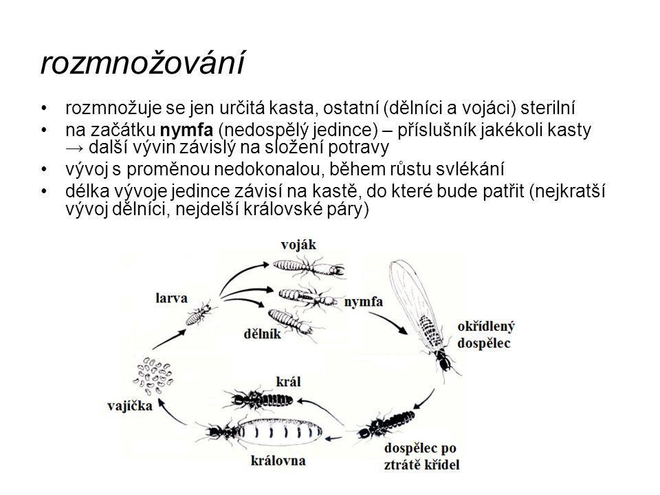 rozmnožování rozmnožuje se jen určitá kasta, ostatní (dělníci a vojáci) sterilní na začátku nymfa (nedospělý jedince) – příslušník jakékoli kasty → da