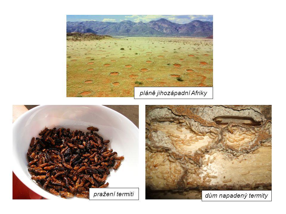 pláně jihozápadní Afriky pražení termiti dům napadený termity