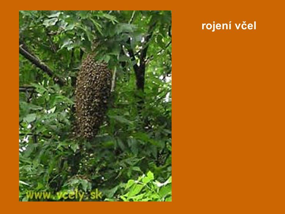 rojení včel