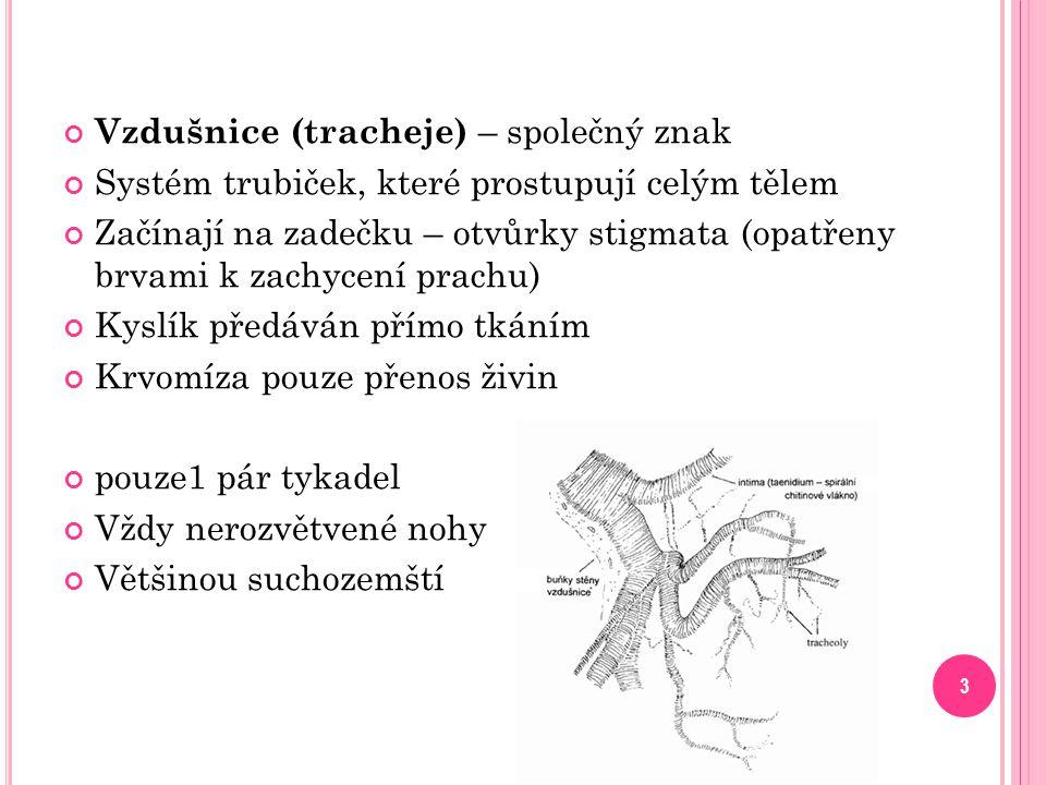 Vzdušnice (tracheje) – společný znak Systém trubiček, které prostupují celým tělem Začínají na zadečku – otvůrky stigmata (opatřeny brvami k zachycení prachu) Kyslík předáván přímo tkáním Krvomíza pouze přenos živin pouze1 pár tykadel Vždy nerozvětvené nohy Většinou suchozemští 3