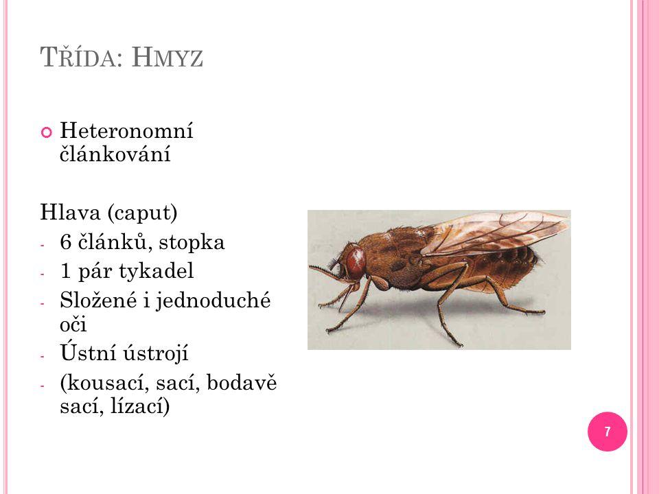 T ŘÍDA : H MYZ 7 Heteronomní článkování Hlava (caput) - 6 článků, stopka - 1 pár tykadel - Složené i jednoduché oči - Ústní ústrojí - (kousací, sací, bodavě sací, lízací)