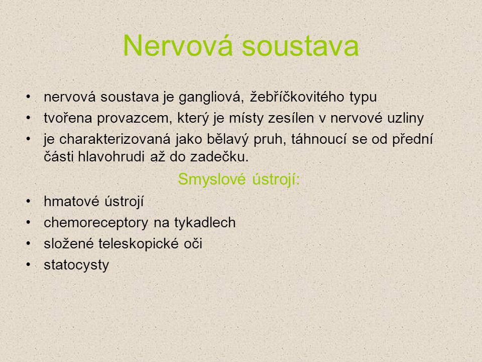 Nervová soustava nervová soustava je gangliová, žebříčkovitého typu tvořena provazcem, který je místy zesílen v nervové uzliny je charakterizovaná jak