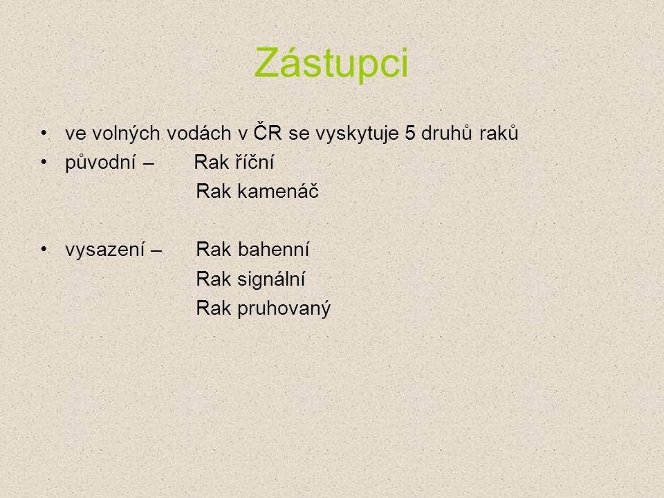 Zástupci ve volných vodách v ČR se vyskytuje 5 druhů raků původní – Rak říční Rak kamenáč vysazení – Rak bahenní Rak signální Rak pruhovaný