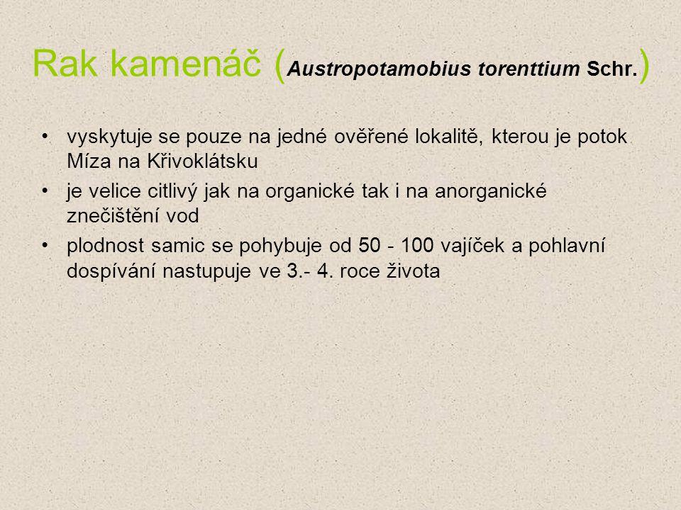 Rak kamenáč ( Austropotamobius torenttium Schr. ) vyskytuje se pouze na jedné ověřené lokalitě, kterou je potok Míza na Křivoklátsku je velice citlivý
