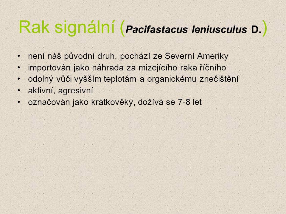 Rak signální ( Pacifastacus leniusculus D. ) není náš původní druh, pochází ze Severní Ameriky importován jako náhrada za mizejícího raka říčního odol
