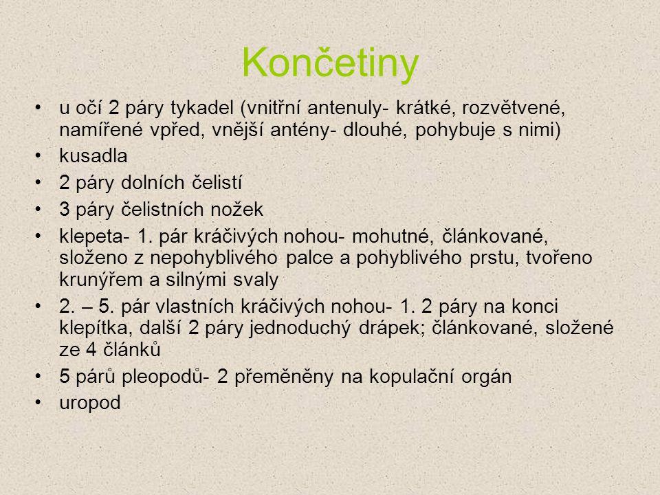 Rak říční ( Astacus astacus L.