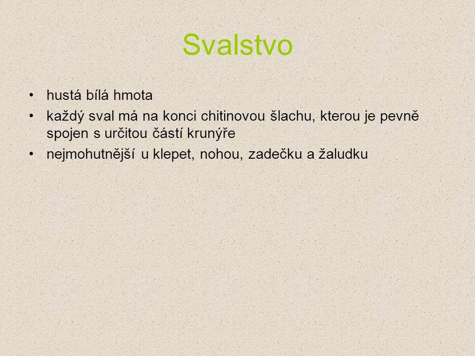 Ochrana raků v ČR rak říční a rak kamenáč – kriticky ohrožené druhy rak bahenní – ohrožený druh manipulace s těmito druhy je možná jen na povolení zvláštních úřadů
