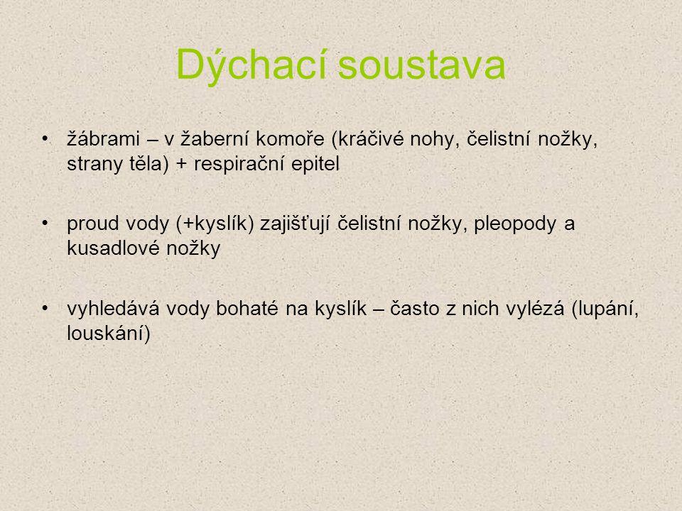 Prameny ze kterých jsme čerpali: www.vurh.jcu.cz Biologie pro gymnázia (nové vydání) (Jan Jelínek, Vladimír Zicháček) www.youtube.com