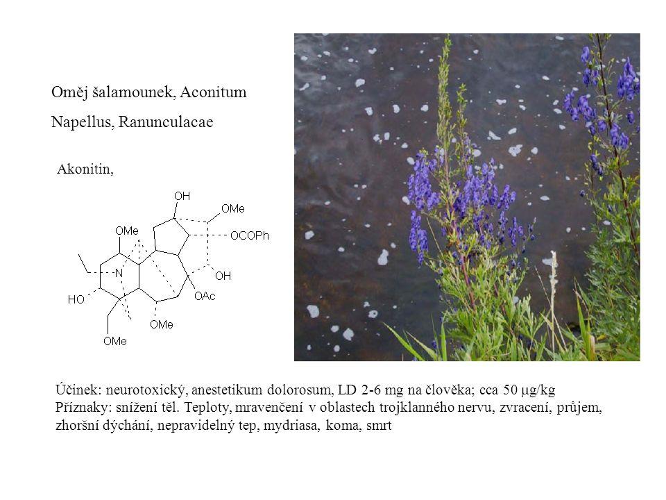 Oměj šalamounek, Aconitum Napellus, Ranunculacae Akonitin, Účinek: neurotoxický, anestetikum dolorosum, LD 2-6 mg na člověka; cca 50  g/kg Příznaky: snížení těl.