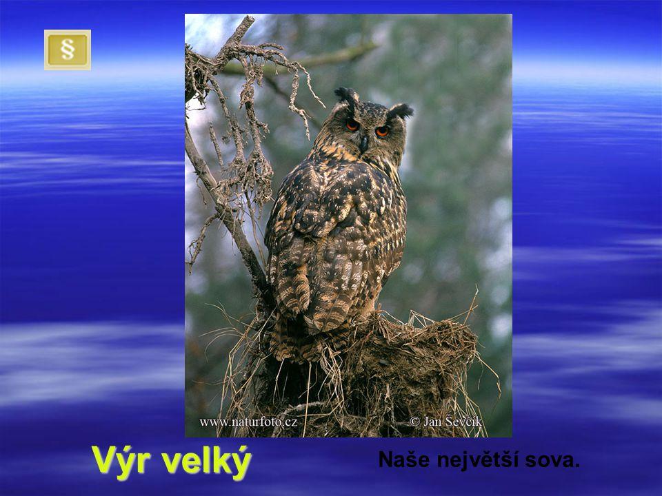 Poznáš, komu která silueta patří? 1. 2. 3. 4. Výr velký Jestřáb lesní Káně lesní Poštolka obecná