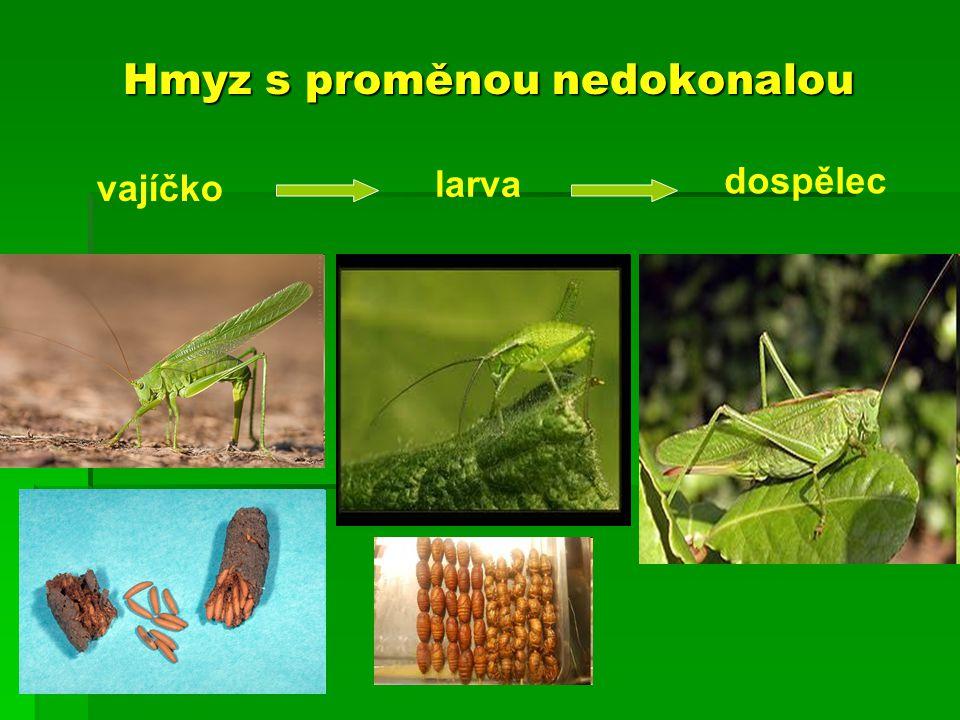 Hmyz s proměnou nedokonalou larva vajíčko dospělec