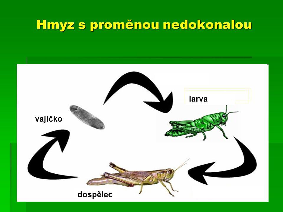 Hmyz s proměnou nedokonalou vajíčko larva dospělec