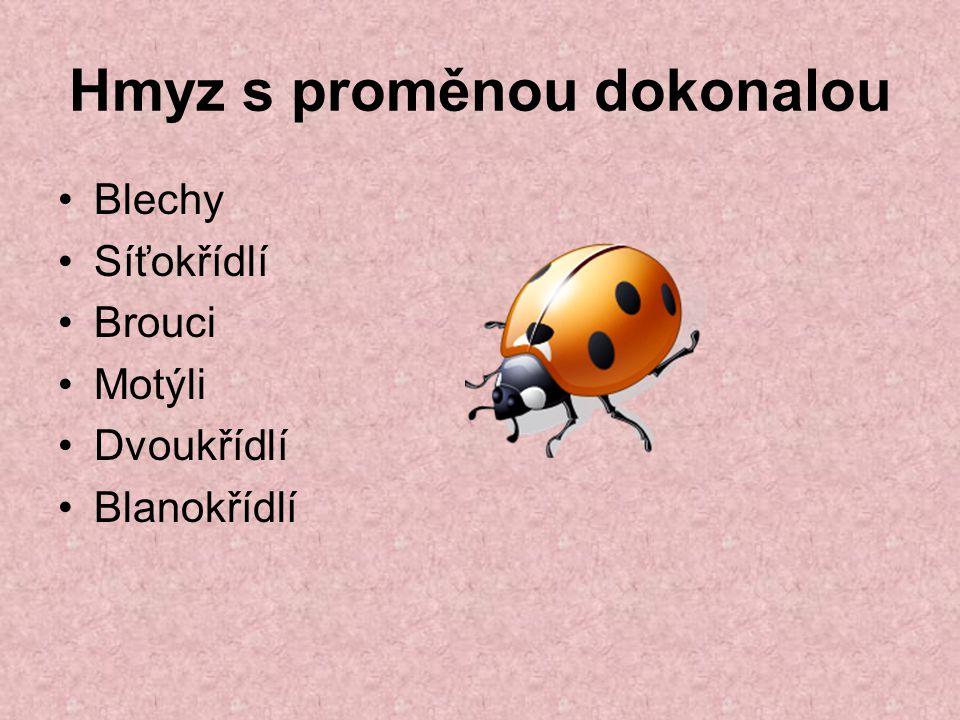 Hmyz s proměnou dokonalou Blechy Síťokřídlí Brouci Motýli Dvoukřídlí Blanokřídlí