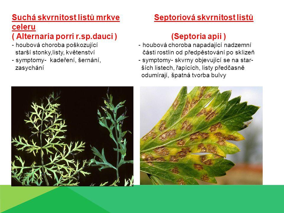 Suchá skvrnitost listů mrkve Septoriová skvrnitost listů celeru ( Alternaria porri r.sp.dauci ) (Septoria apii ) - houbová choroba poškozující - houbová choroba napadající nadzemní starší stonky,listy, květenství části rostlin od předpěstování po sklizeň - symptomy- kadeření, šernání, - symptomy- skvrny objevující se na star- zasychání ších listech, řapících, listy předčasně odumírají, špatná tvorba bulvy