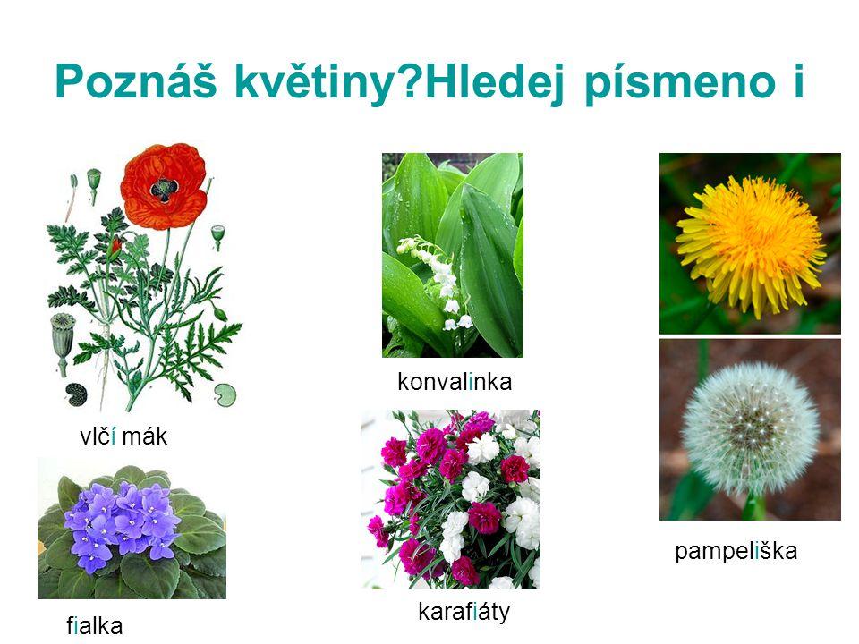 Poznáš květiny?Hledej písmeno i vlčí mák karafiáty konvalinka pampeliška fialka